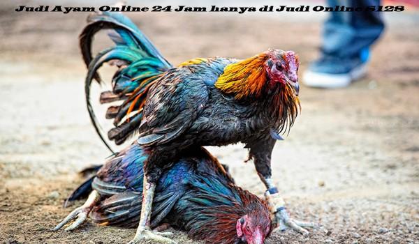 Judi Ayam Online 24 Jam hanya di Judi Online S128
